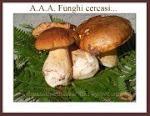 Partecipo alla ricetta funghi