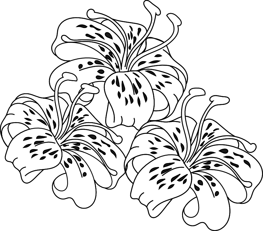 Stargazer Lily Coloring Pages