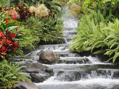 Cascada rodeada de flores