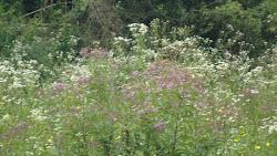 um campo de flores naturais