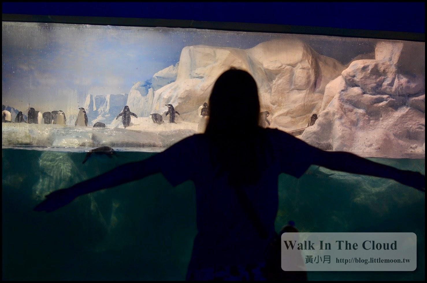 學企鵝張手面壁的剪影