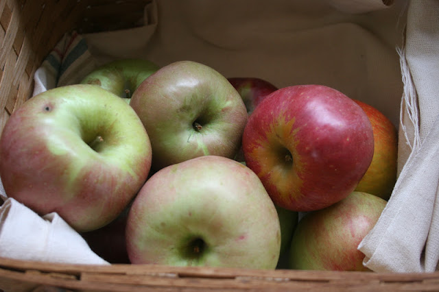 Heirloom apples in a basket