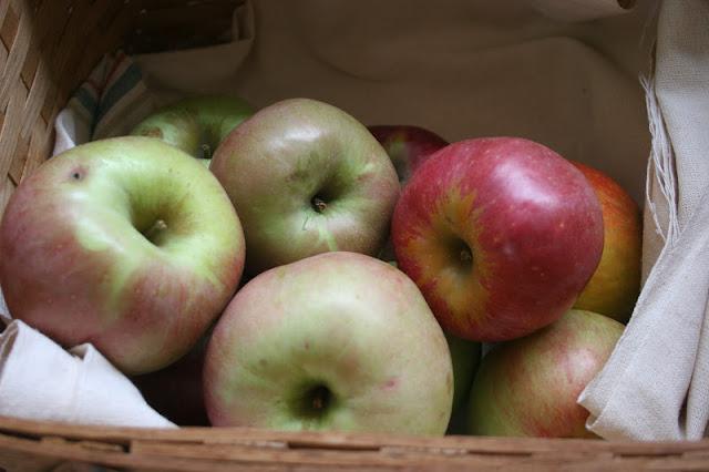 Heirloom apples in a basket