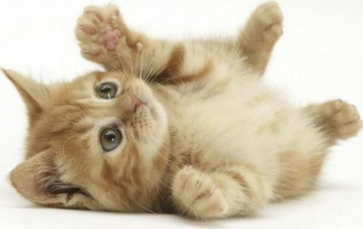 Funny animals zone really cute cats and kittens really cute cats and kittens voltagebd Gallery