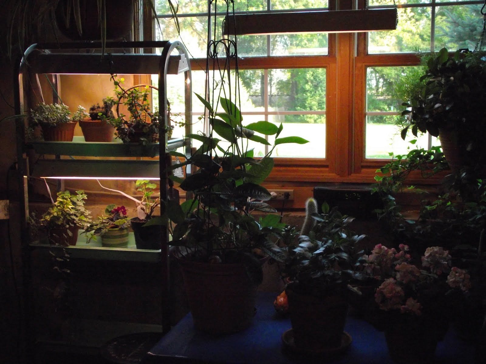 never enough time plants in the basement