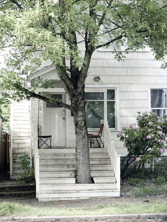 Pohon di depan rumah