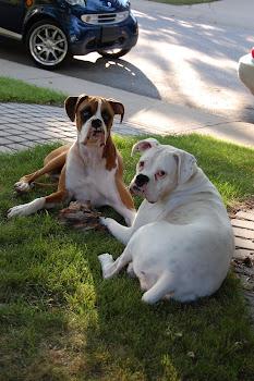 Paulo & Bella