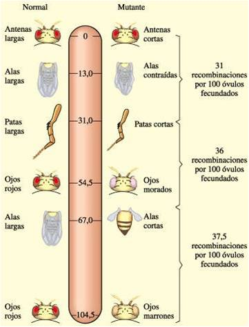 Blog de Biologia: Teor...