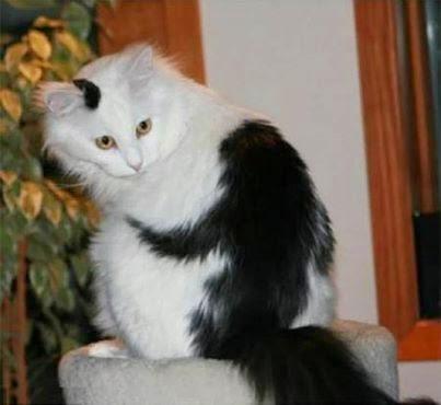 Kucing Stress Tidak Mau Makan