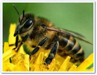 Селекция медоносной пчелы онлайн видео