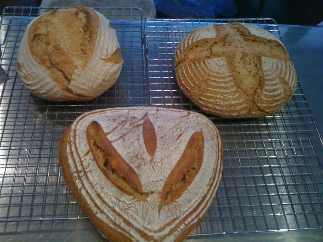 RED TAIL, SPARROW and OSPREY sourdough breads