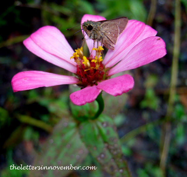 pink flower with bug