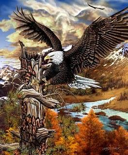 Fakta Tentang Burung Elang