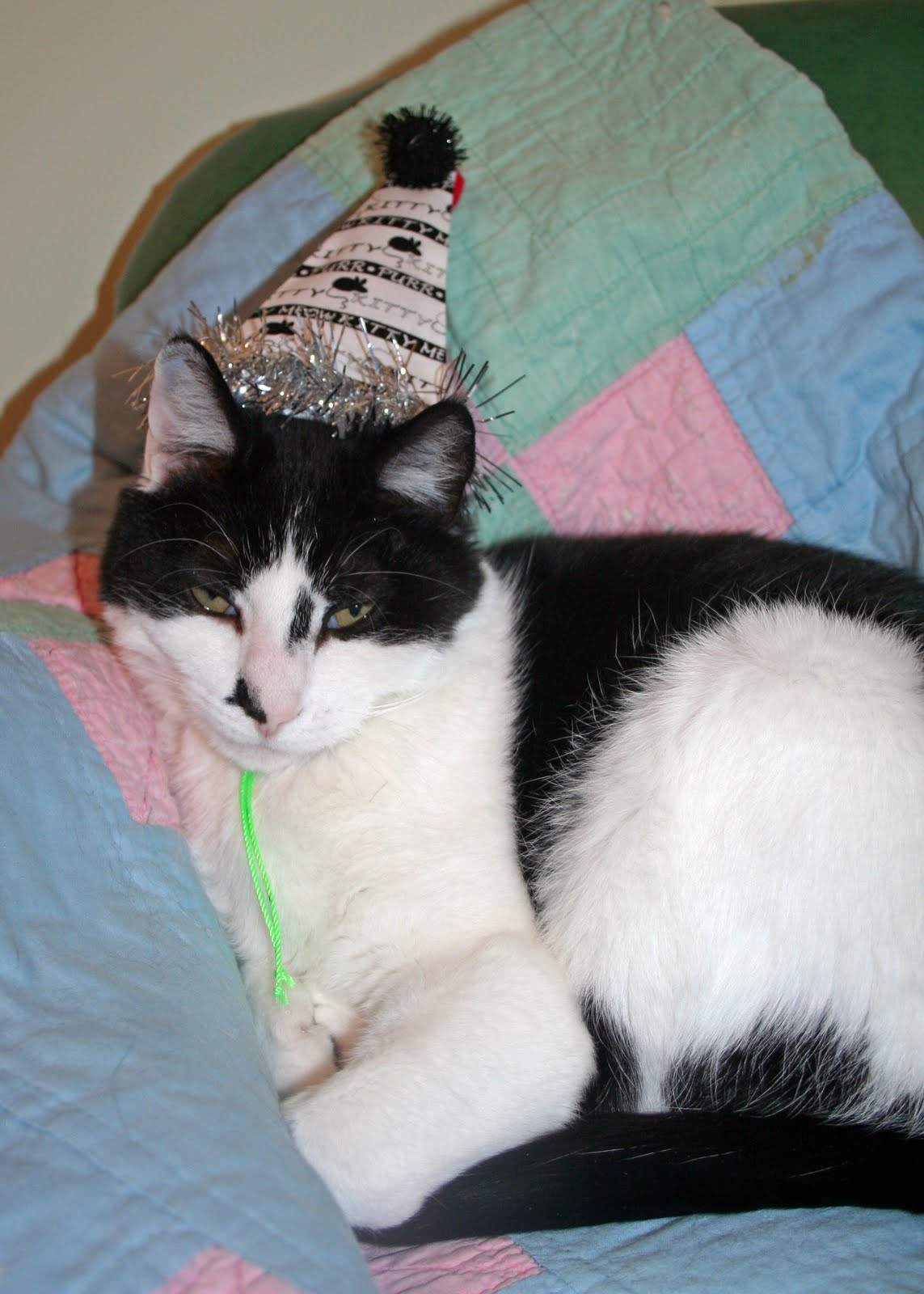 The Cat in the Clover: New Line of Party Hats for Cats!