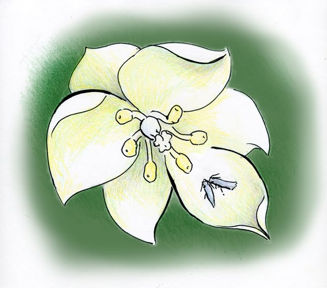 yucca flower and moth relationship with god