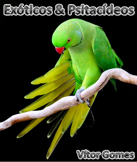 Exóticos & Psitacídios Vítor Gomes