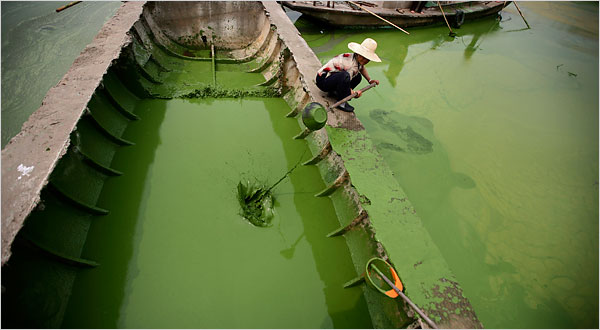 problemas de eutrofización en río
