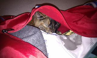 Stowaway tortoiseshell cat