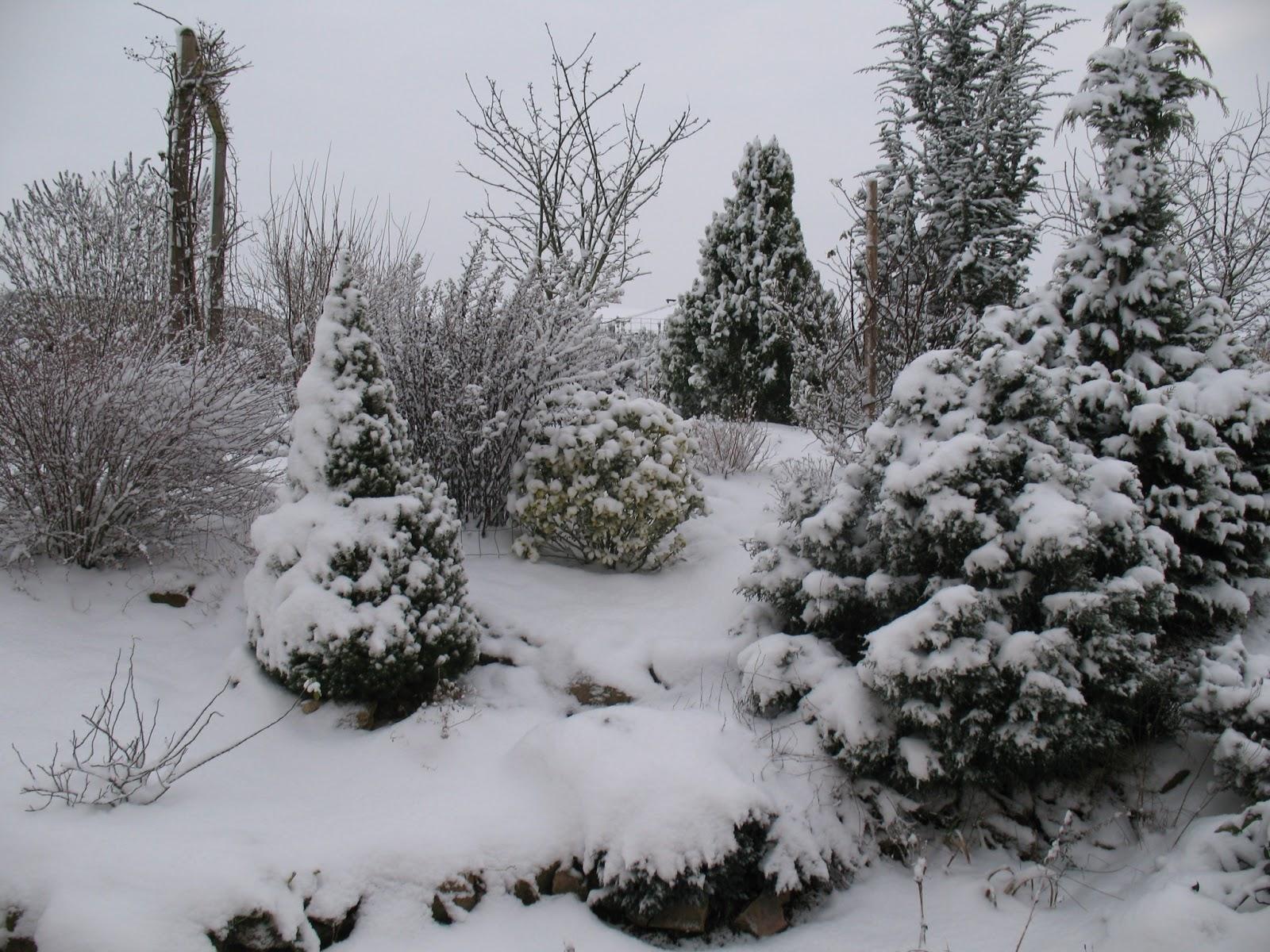 Roses du jardin ch neland le jardin sous la neige - Jardin de chen ...