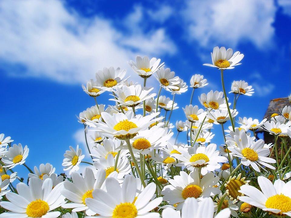 fotos de flores lindas miren les gustara Taringa! - Imagenes Con Flores Naturales