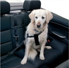 Travelling with dogs, traveling with a dog, a dog in the car, dogs care while traveling, how to care for a dog to travel, how to transport a dog while traveling, as must transport a dog in a car, I care that my dog when traveling