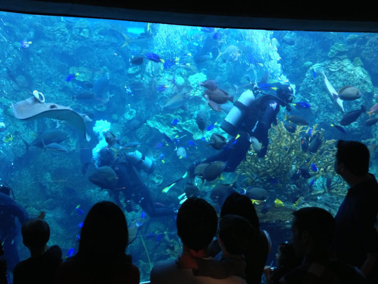 Experiencing Los Angeles Aquarium Of The Pacific Long
