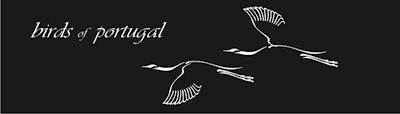 Birds of Portugal