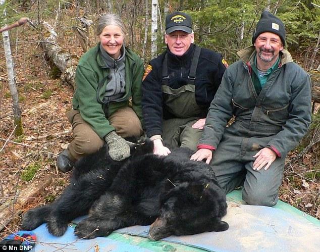 World's Oldest Wild Bear