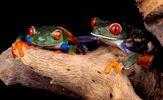 Fotografías de ranas (7 frogs pictures)