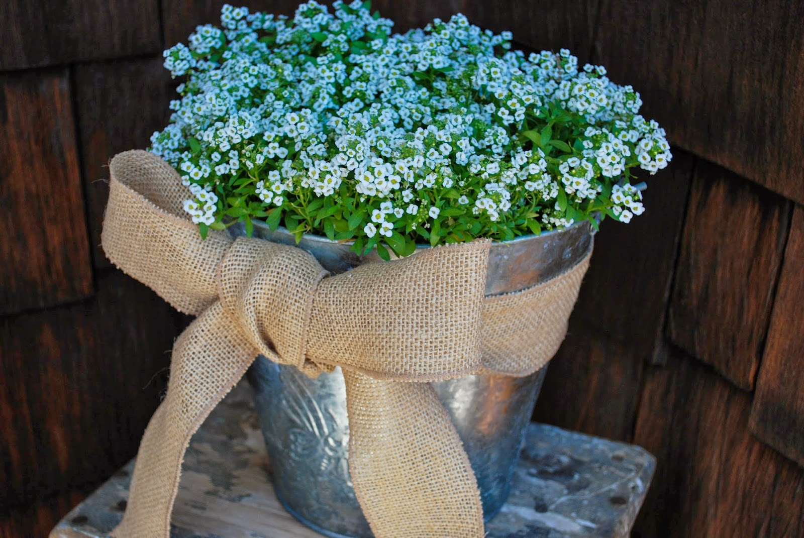 The fancy yancey potted spring flowers diy potted spring flowers diy mightylinksfo