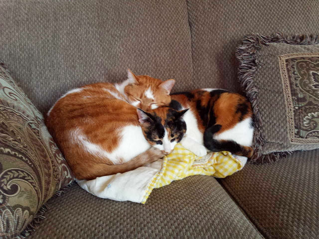 Funny cats - part 81 (40 pics + 10 gifs), cat pics, two cats sleeping on couch