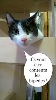 Chat noir et blanc du Chat Libre de Toulouse.