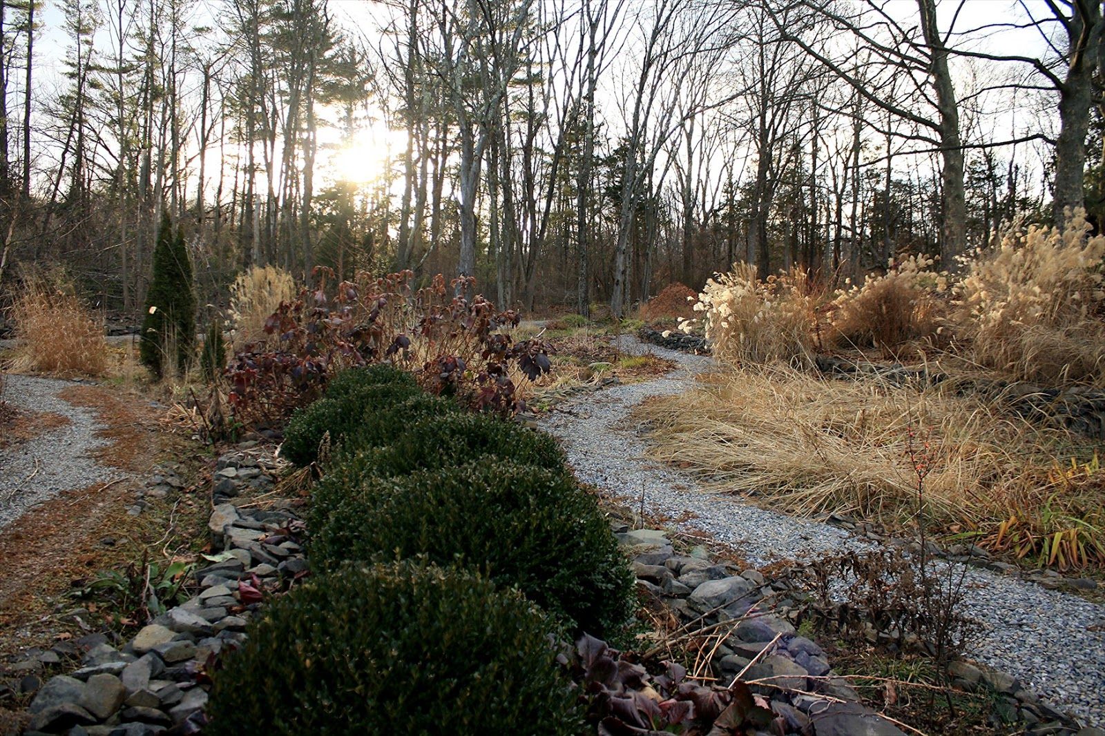 View from Federal Twist: Garden Diary: Reflections