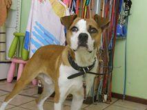 Βρεθηκε στον Φάρο Ψυχικού σκυλάκι με δερμάτινο κολλάρο με καρφάκια. Το αναζητά κανείς?