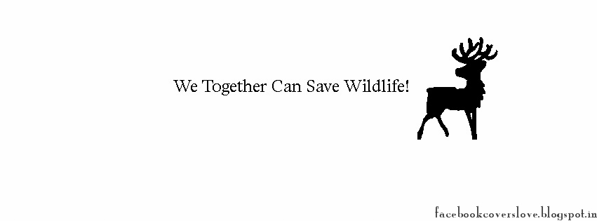 how can we save wildlife We can't let that happen the african wildlife foundation is leading a global effort to put a stop to the join the fight to save these majestic creatures.