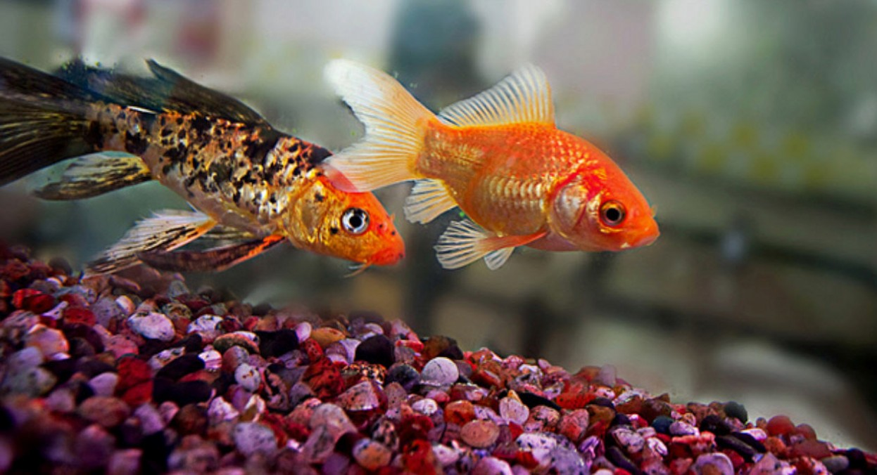 Fish wallpapers 3d wallpaper nature wallpaper free for 3d fish wallpaper
