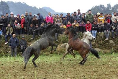 Pertandingan laga kuda
