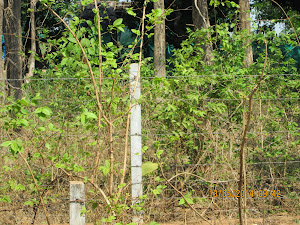 """ELECTRIC WIRE FENCING"" that seperates the ""Buffer Zone"" from villages."