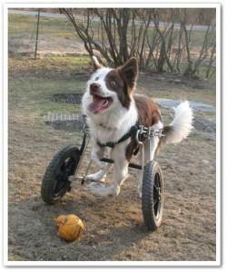 Que4patas carritos con ruedas delanteras for Carritos para perros