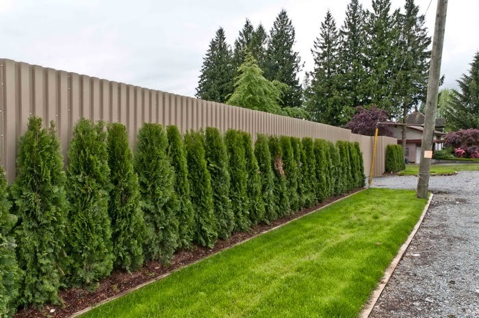 tanaman pagar yang indah dan sehat