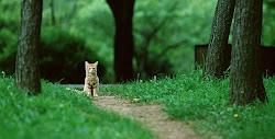 Cat 2013
