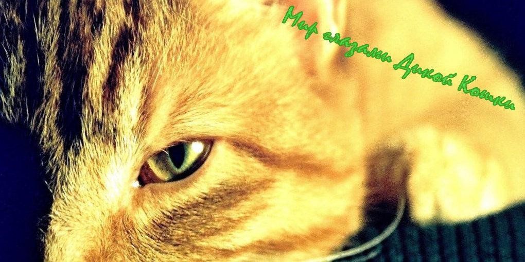 Мир глазами Дикой Кошки