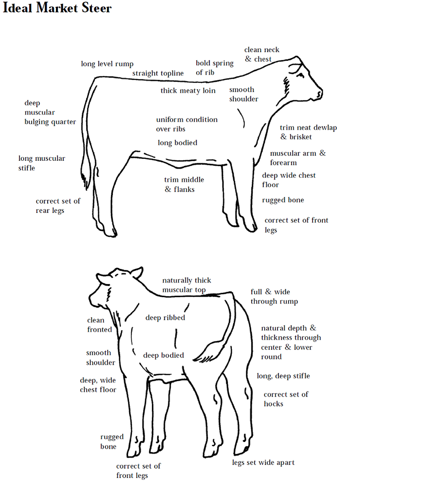 5 Reasons I Dont Like Veganism moreover Crossbreeding Systems For Beef Cattle likewise External Parts Of A Cow Game together with Saginata3 further Recanimalhandlingguidelines. on beef cattle diagram