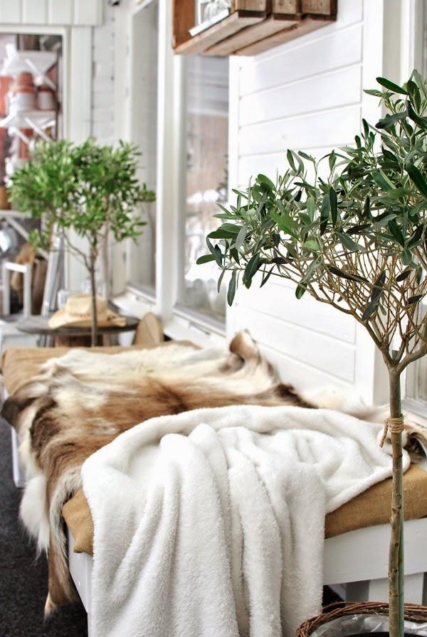 Hannas renfäll olivträd uterum altan