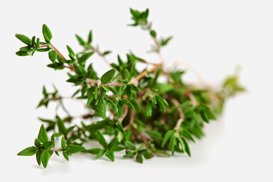 manfaat daun thyme