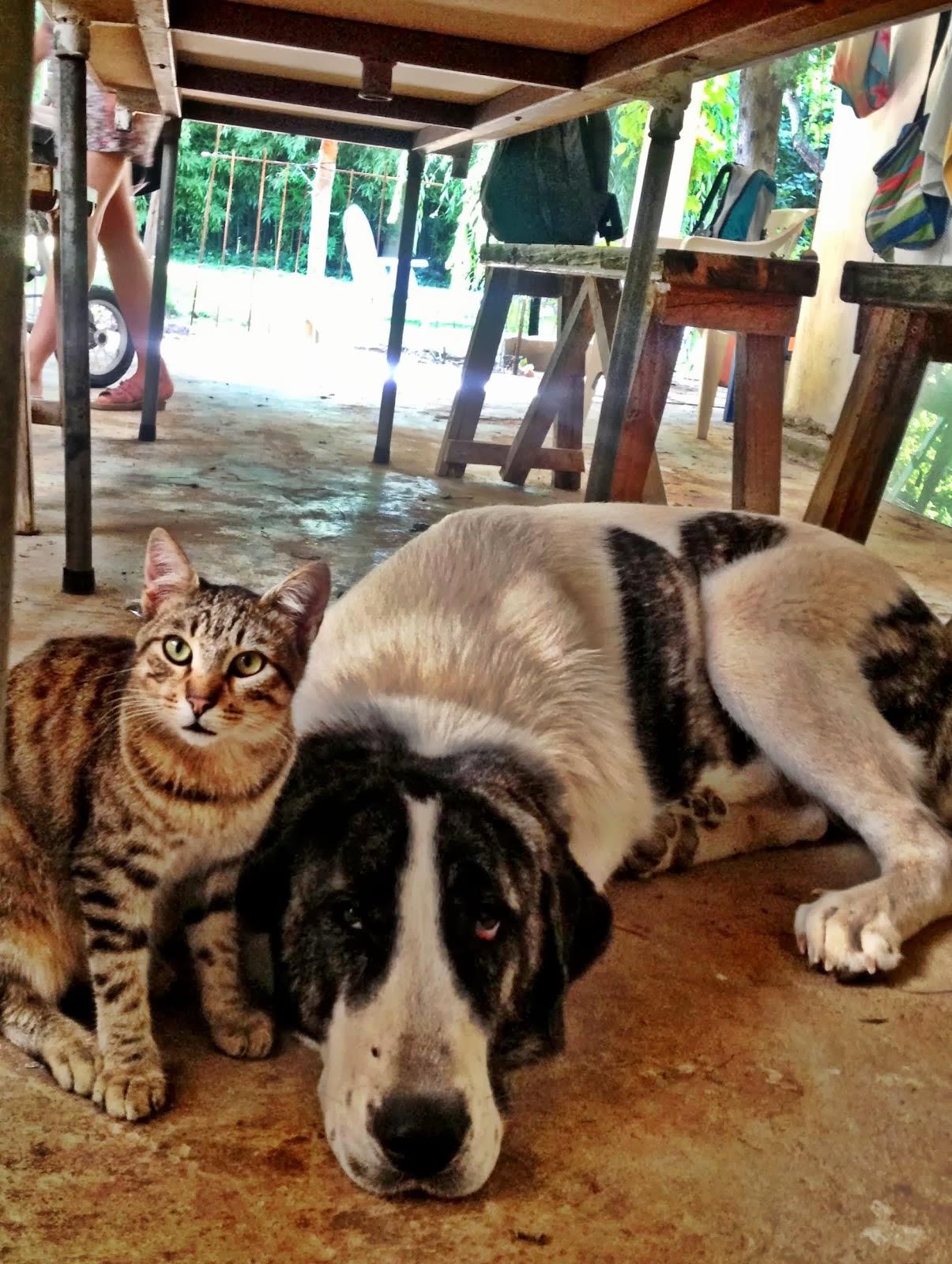 Gato y Pancha