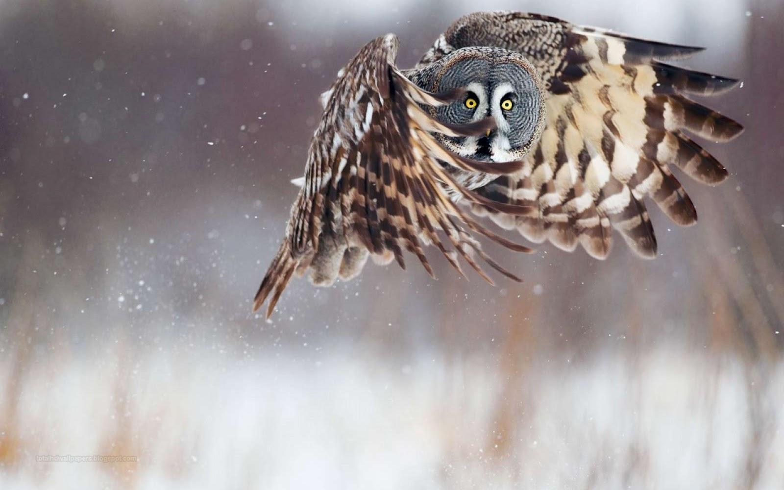 Winter Owls Wallpaper