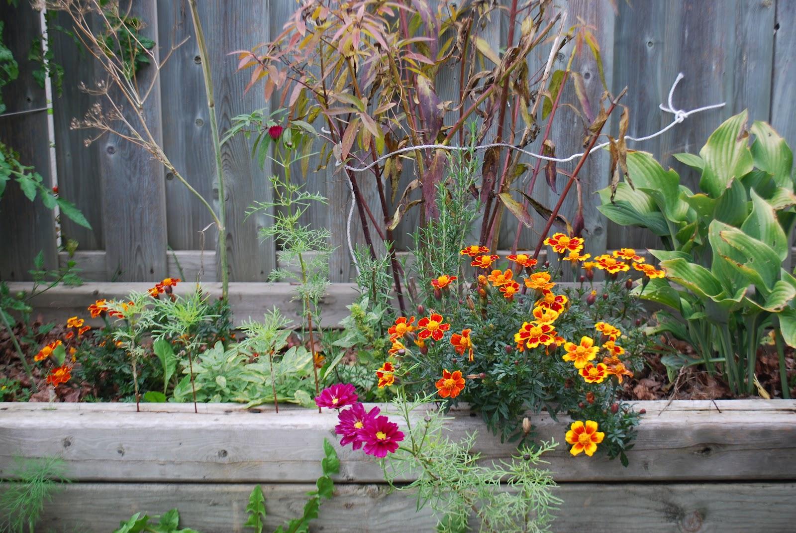 3 jardins au qu bec la bizarrerie du brocoli et les for Jardin quebec