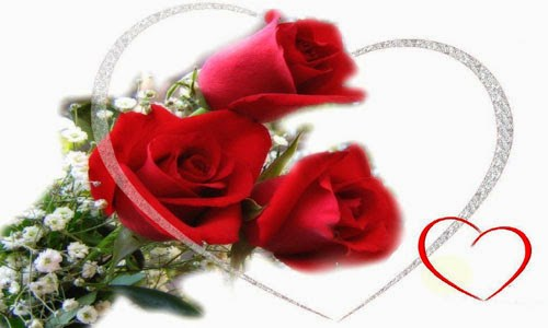 Best Rose Images of Valentines day 2016