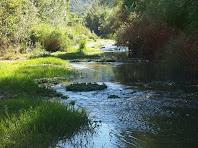 Detall de la zona mitja del riu Calders, molt a prop de Comelles